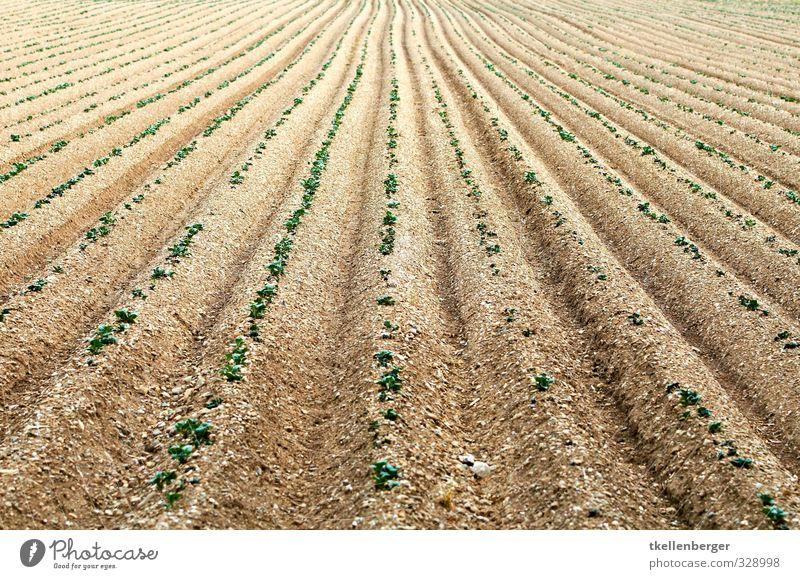 Ackerfurche begrünt Natur Sommer Pflanze Landschaft Umwelt Sand Gesundheit braun Lebensmittel Feld dreckig Erde Wachstum frisch Urelemente