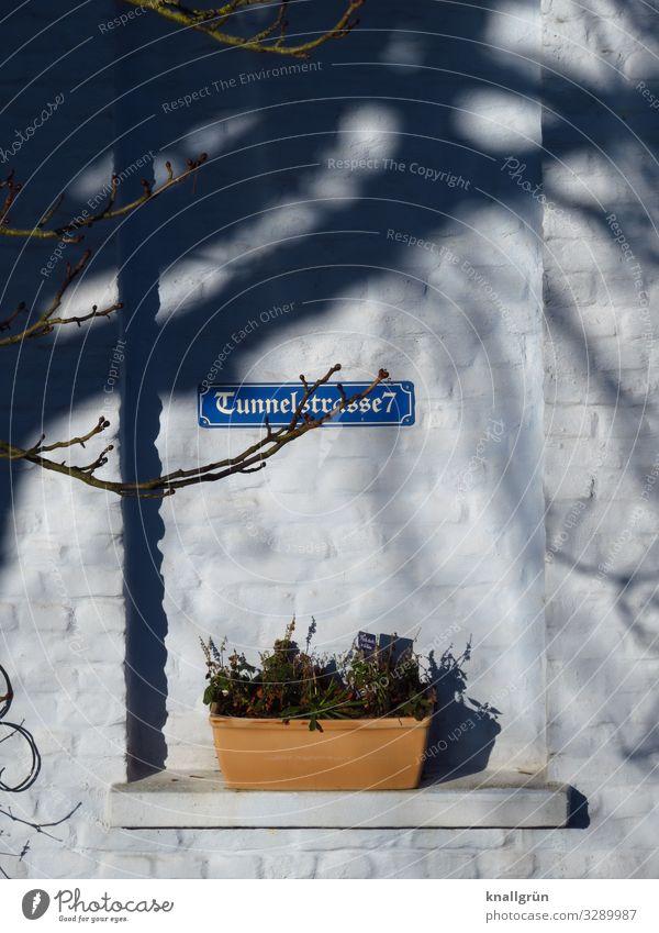 Tunnelstrasse7 Pflanze Haus Einfamilienhaus Mauer Wand Fenster Fensterbrett Strassenschild Blumenkasten Schriftzeichen Schilder & Markierungen Hinweisschild