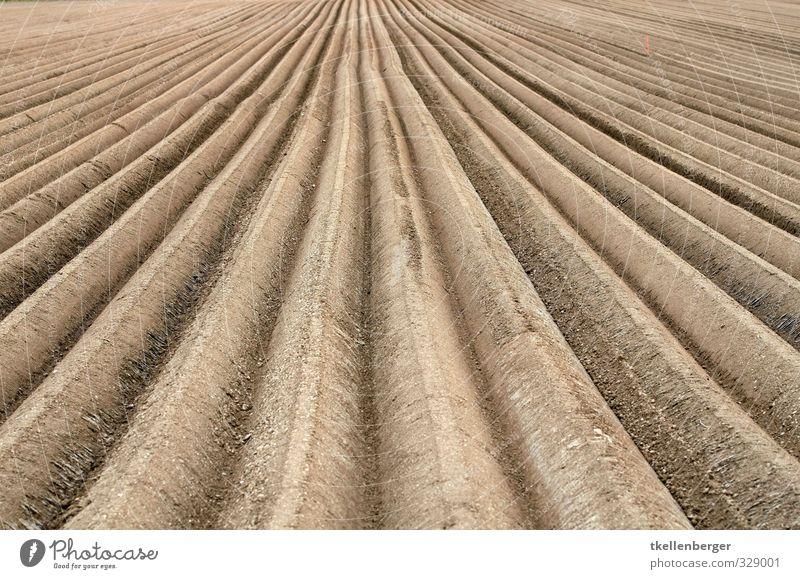 Ackerfurche Natur Erde Feld braun Ackerbau Ackerboden Aussaat Landwirt Landwirtschaft Landarbeiter Flucht pflügen Furche Felsspalten ackerfurche Pflug pflücken