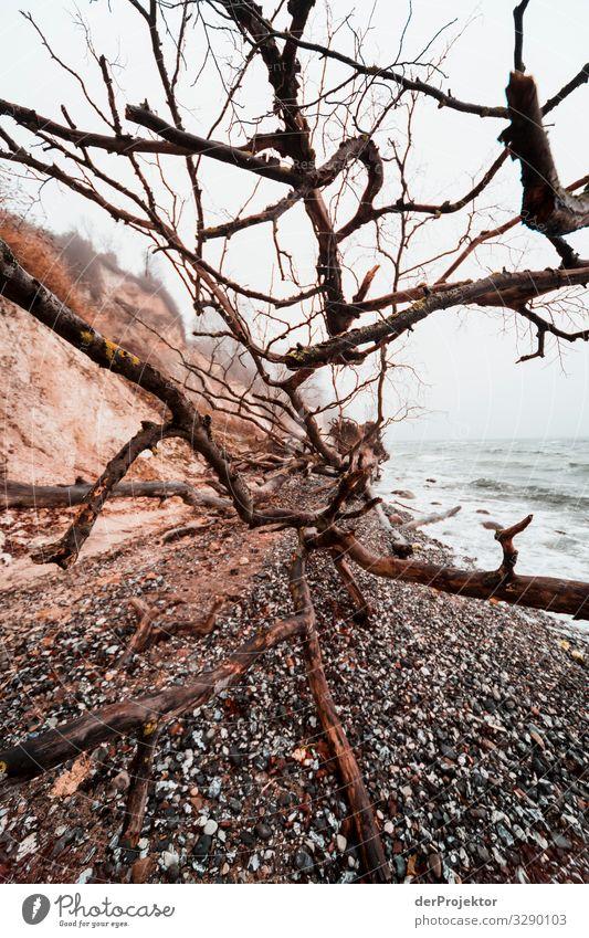Küste bei Sassnitz auf Rügen Ferien & Urlaub & Reisen Natur Pflanze Landschaft Baum Tier Winter Ferne Strand Umwelt Tourismus Freiheit Stein Ausflug wandern