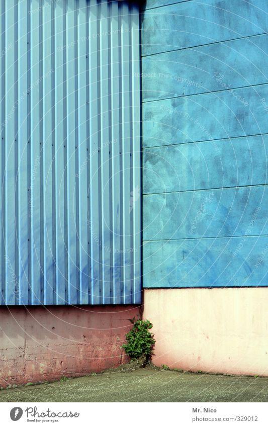 hoffnungsvoll Umwelt Pflanze Gebäude Architektur Mauer Wand Fassade blau türkis Unkraut Ecke Jungpflanze Industriegelände Hoffnung Wachstum Hinterhof Stadt