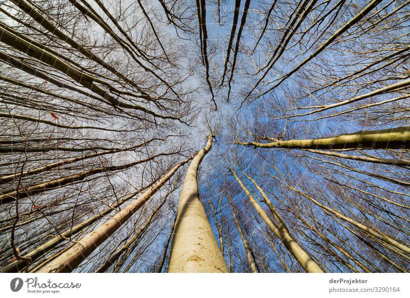 Buchenwald auf Rügen Ferien & Urlaub & Reisen Tourismus Ausflug Abenteuer Ferne Freiheit wandern Umwelt Natur Landschaft Pflanze Winter Schönes Wetter Baum Wald