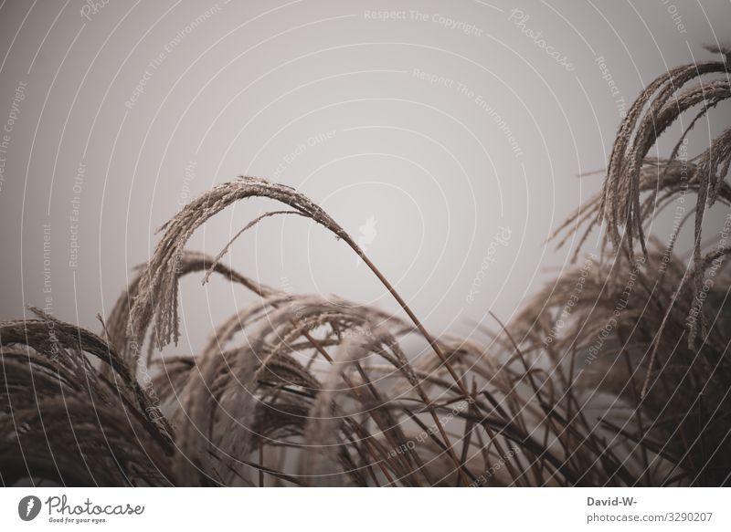 Ziergräser bei Frost Kälte Winter Eis kalt Außenaufnahme frieren Farbfoto gefroren weiß Menschenleer Eiskristall Tag Raureif Pflanze Natur Umwelt Wintertag