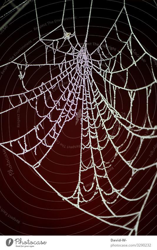 Die Eisheiligen stehen vor der Tür eisheiligen kalt Frost Spinnennetz Winter Kälte frostig Muster weiß Natur gefroren Menschenleer Strukturen & Formen frieren