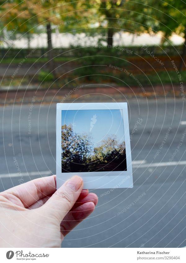 Polaroid Natur Umwelt Tier Himmel Frühling Sommer Herbst Klima Wetter Stadt Stadtrand Park Straße Wege & Pfade braun gelb gold grau grün türkis weiß Hand Baum