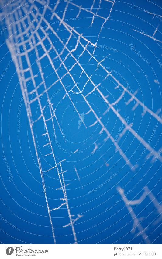 Frosty Spiderweb Natur Eis Spinnennetz blau weiß Netzwerk Stabilität Farbfoto Nahaufnahme Detailaufnahme Makroaufnahme Menschenleer Textfreiraum links