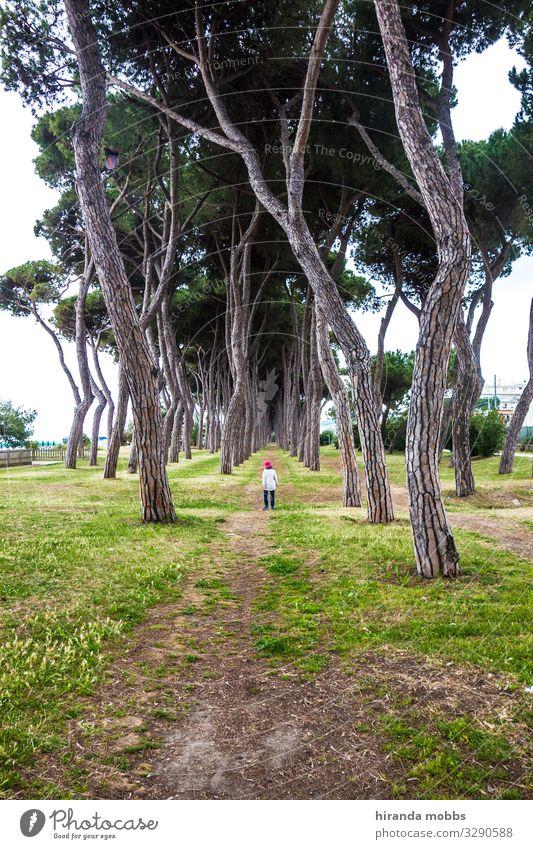 Allee Kind Junge Kindheit Körper 1 Mensch 3-8 Jahre Umwelt Natur Landschaft Pflanze Himmel Sommer Schönes Wetter Baum Park Wald Seeufer Wege & Pfade Hut
