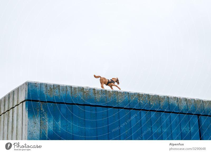 weitsichtig | Pferd am Horizont Tier 1 laufen rennen frech wild Abenteuer Bewegung bedrohlich Glück skurril Surrealismus träumen Wandel & Veränderung