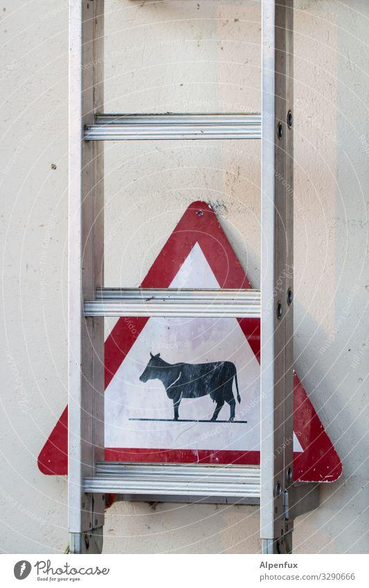Achtung Gegenverkehr ! Tier Nutztier Kuh Leiter Hinweisschild Warnschild Verkehrszeichen Vorsicht Höhenangst gefährlich Abenteuer Überraschung Warnung