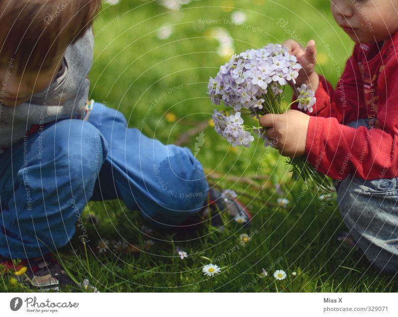 Pflücken Mensch Kind Blume Liebe Wiese Gefühle Frühling Blüte Freundschaft Stimmung Familie & Verwandtschaft Zusammensein Kindheit Fröhlichkeit niedlich Geschenk