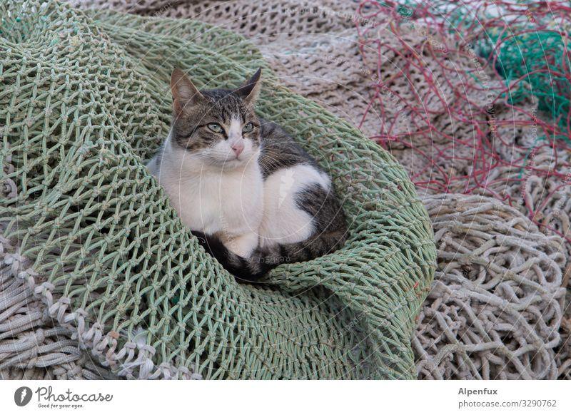 Beifang Katze Tier ruhig Freude Zufriedenheit liegen ästhetisch niedlich Coolness Schutz Sicherheit geheimnisvoll Netzwerk Haustier Vertrauen Mut