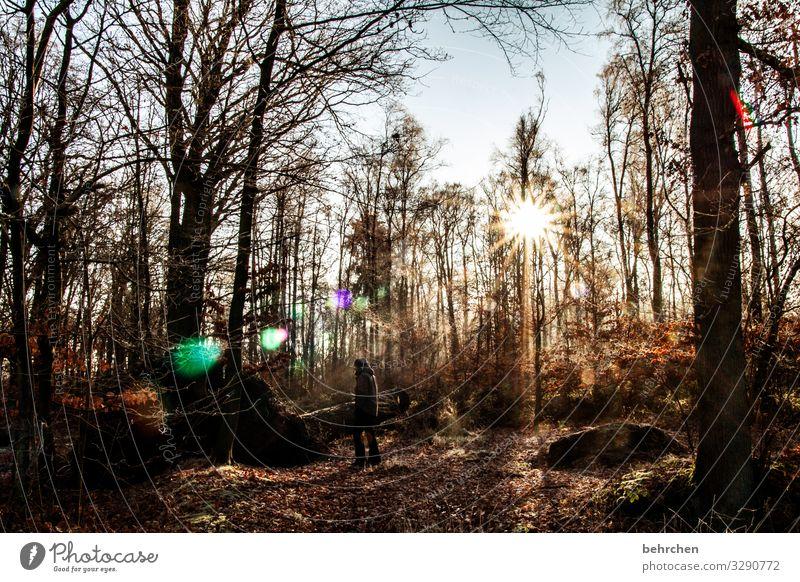 norddeutscher winter Umwelt Natur Landschaft Sonne Winter Eis Frost Schnee Pflanze Baum Sträucher Wald kalt schön Raureif sonnenstern wandern Spaziergang