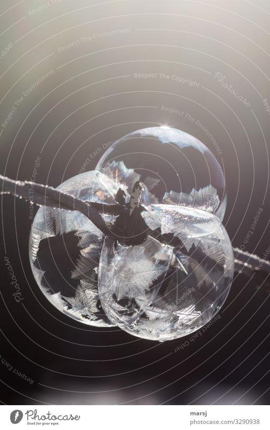 Ellbogengesellschaft Winter Eis Frost Eiskristall Stacheldraht Eisen Kristalle sportlich außergewöhnlich Zusammensein kalt Kraft Willensstärke Macht träumen