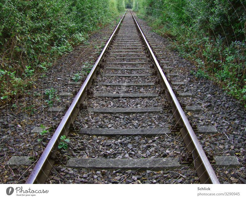 Fernweh Verkehr Verkehrswege Bahnfahren Schienenverkehr Eisenbahn Gleise Metall Ferne Unendlichkeit braun grau grün silber Ferien & Urlaub & Reisen Vegetation