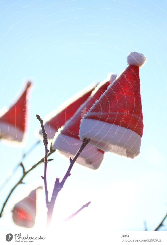 wintermützen Mütze Lebensfreude Leichtigkeit Nikolausmütze Ast Baum Weihnachtsbaum Weihnachten & Advent Anti-Weihnachten Winter Farbfoto Außenaufnahme