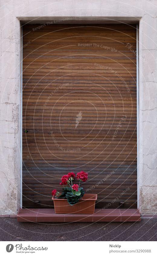 Stillleben Geranien - geschlossene Rolladen Pflanze Blume Pelargonie Blumenkasten Jalousie Rollladen Fenster Fensterbrett Rahmen authentisch Originalität retro