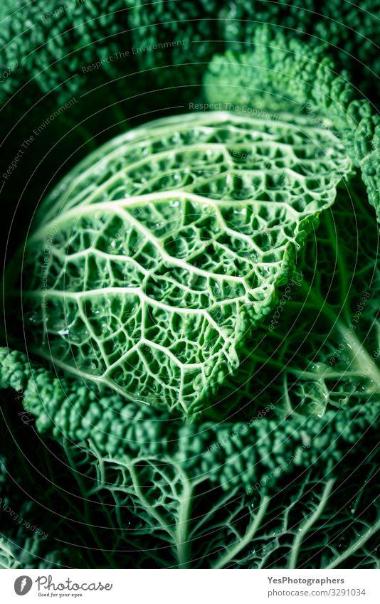 Grünkohl, gesunde Ernährung, rohes Gemüse. Frischkohl-Makro Vegetarische Ernährung Diät Gesunde Ernährung Garten Pflanze Blatt frisch natürlich Ackerbau
