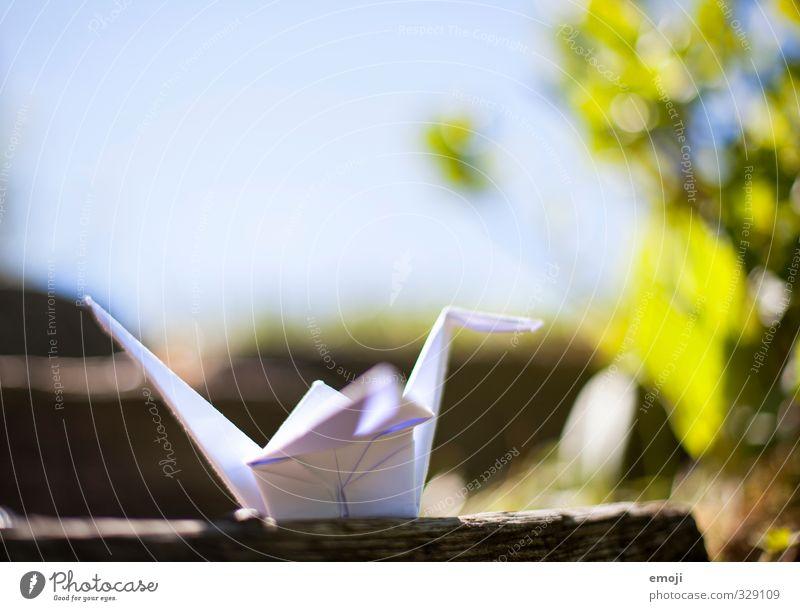 in freier Wildbahn Natur Pflanze Tier Umwelt Frühling natürlich Kranich Origami