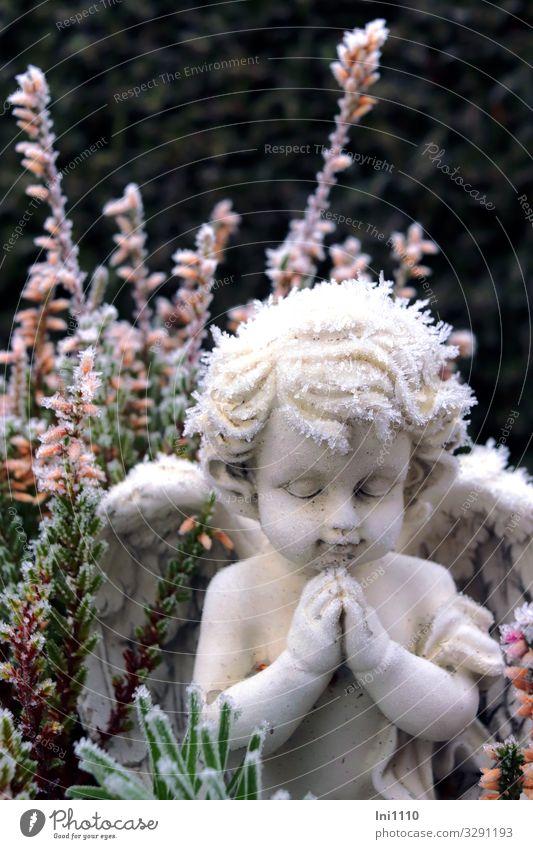 Engel werden immer gebraucht Pflanze Heidekrautgewächse Garten Park Stein Zeichen blau grün schwarz weiß Raureif Figur Gebet Erinnerung Grabschmuck Winter