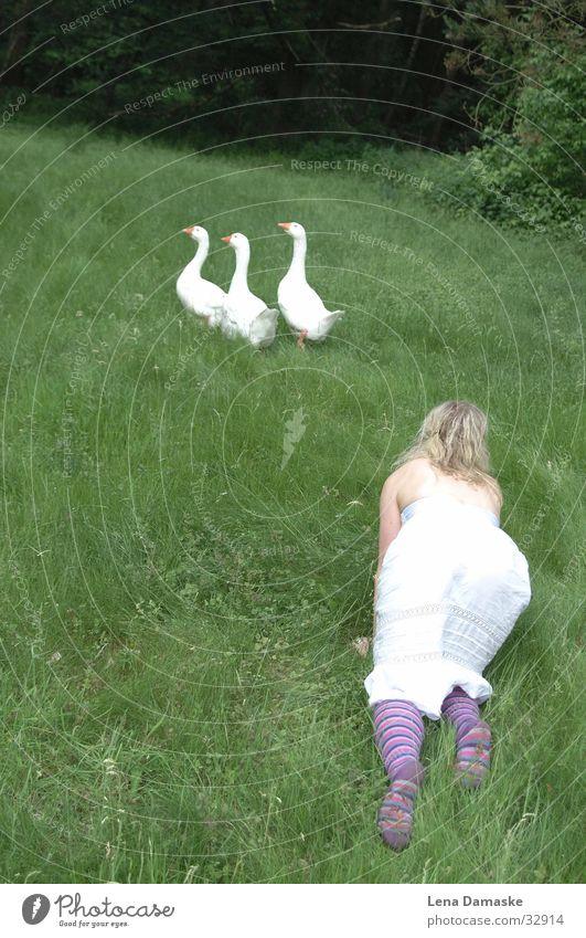 Gänsemagd Natur Sommer Tier Wiese Gras Verkehr Gans