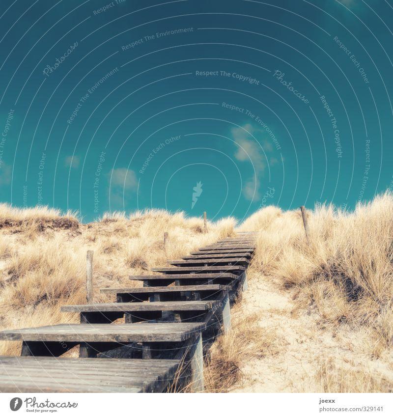 Westen Landschaft Himmel Wolken Horizont Sommer Schönes Wetter Sträucher Hügel Treppe Wege & Pfade Holz alt blau braun ruhig Hoffnung Glaube Fernweh Idylle