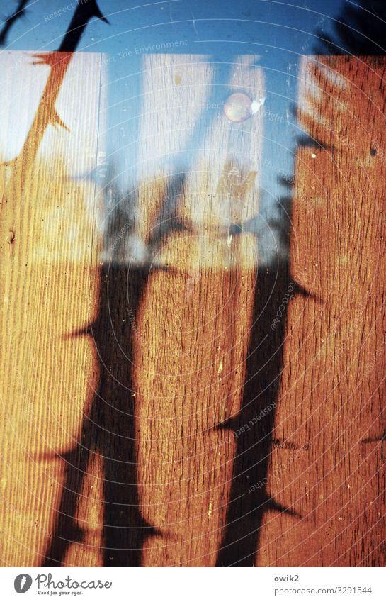 Stacheldraht Rosengewächse Dorn Schwarzes Brett Holz Glas Spitze stachelig Farbfoto Außenaufnahme Nahaufnahme Detailaufnahme Menschenleer Licht Schatten