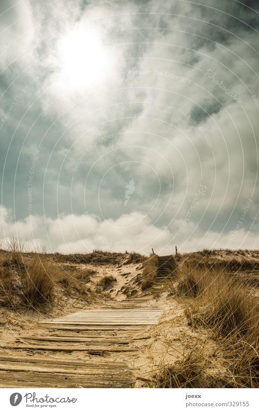 Holz und Sand Ferne Sommerurlaub Insel Natur Landschaft Pflanze Himmel Wolken Horizont Sonnenlicht Schönes Wetter Gras Hügel Amrum Wege & Pfade dreckig blau