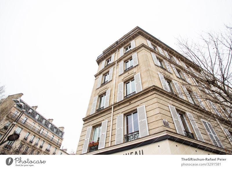 Haus Stadt Hauptstadt braun weiß Paris Architektur Bauwerk Fenster Baum Frankreich Farbfoto Textfreiraum oben Tag Licht