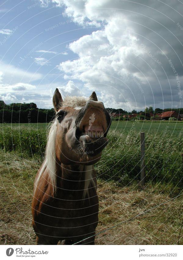 zähne zeigen Tier lachen Nase Verkehr Pferd Gebiss Maul