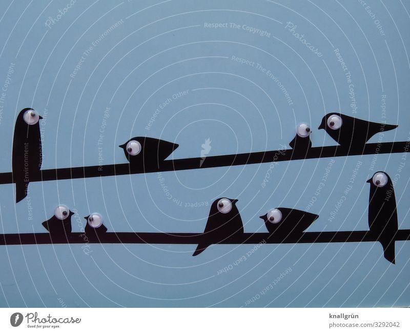 Freundschaft Tier Vogel Tiergruppe Schwarm Kinderaugen Kommunizieren sitzen Zusammensein niedlich blau schwarz weiß Geborgenheit Sympathie Kontakt Blick
