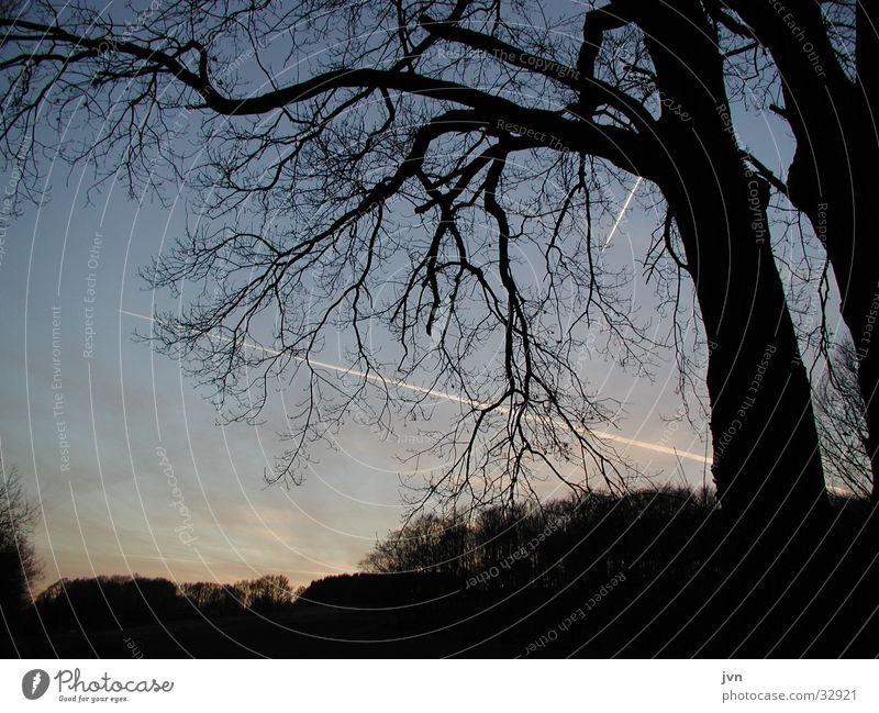kreuzung Baum Verabredung Abenddämmerung kreuzen Kondensstreifen