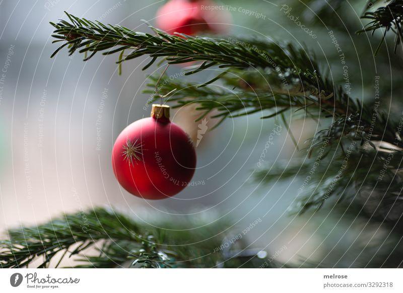 Christbaumkugel am Baum Weihnachten & Advent Pflanze Farbe schön grün rot Winter Religion & Glaube Feste & Feiern Stil Dekoration & Verzierung leuchten glänzend