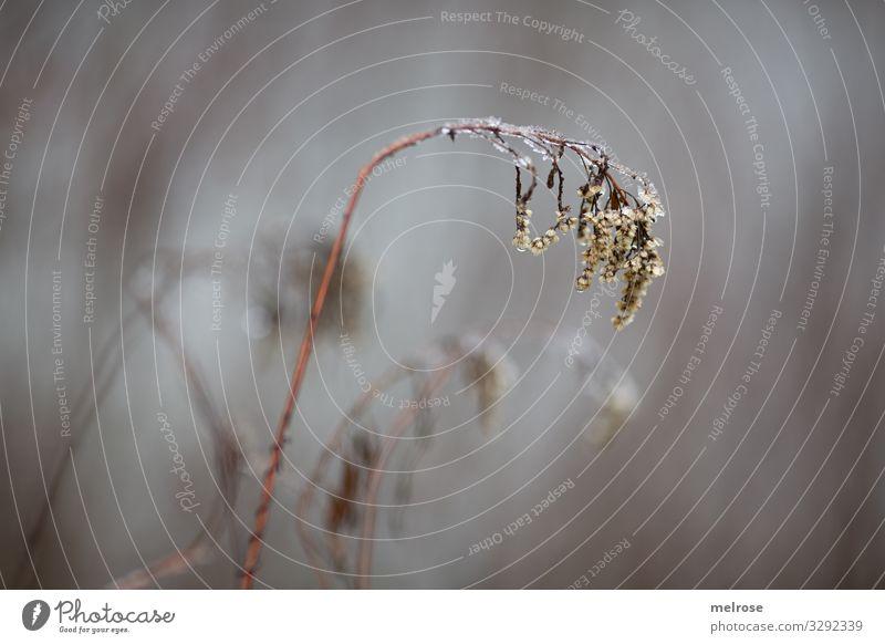 Pflanze geknickt in der Kälte Lifestyle Natur Wassertropfen Winter schlechtes Wetter Eis Frost Sträucher Blüte Gräserblüte Gras Wald Wasserstropfen Regen trist