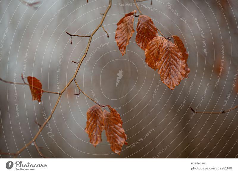 Blätter im Winter ohne Schnee Lifestyle Stil Natur schlechtes Wetter Pflanze Baum Blatt Zweige u. Äste Wald Regen Wassertropfen trist hängen Traurigkeit dunkel