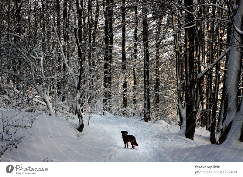 Hund im Winterwald Winterstimmung Schneelandschaft Wanderausflug Spaziergang Waldspaziergang Waldstimmung Wege & Pfade Wegekreuz Wegweiser