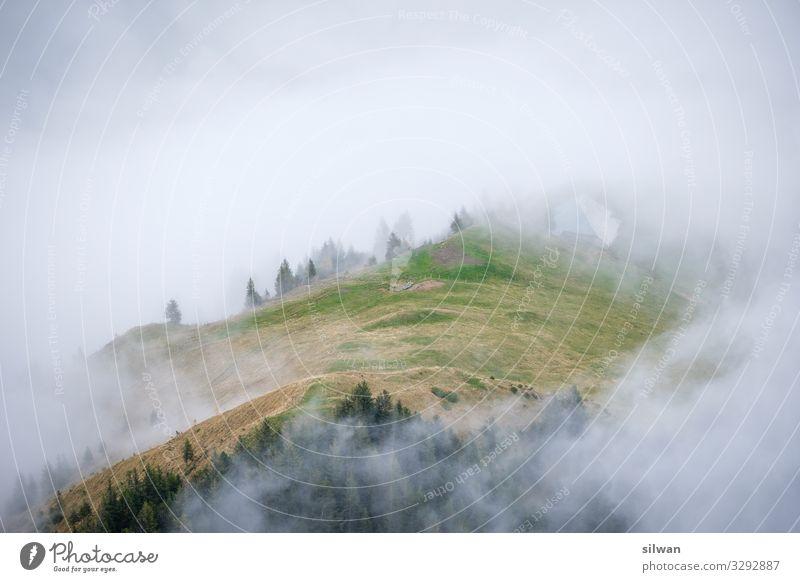 Nebelwelle wandern Natur Landschaft Herbst Wetter schlechtes Wetter Wald Hügel Alpen ästhetisch außergewöhnlich bedrohlich hell kalt Sauberkeit weich gelb grün