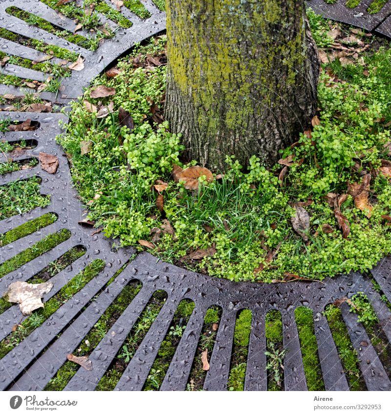 umzingelt Baum Baumstamm rund grau grün Gitter umzingeln Kreis kreisrund Beet Naturwuchs Grünpflanze Unkraut Herbst Herbstlaub Bodendecker Gitterrost Scheibe