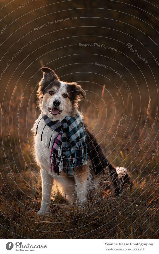 Loveling Dog Freude Freizeit & Hobby Ausflug Natur Landschaft Sonnenaufgang Sonnenuntergang Sonnenlicht Herbst Schönes Wetter Baum Gras Sträucher Moos Wiese