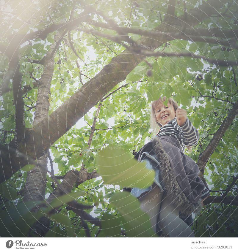 kirschen pflücken Kind Mädchen Baum Kirschbaum Kirsche Kirschen pflücken Sommer Ast Blatt Blätterdach Baumklettern Sonnenlicht Kindheit Ernte Mut Höhenangst