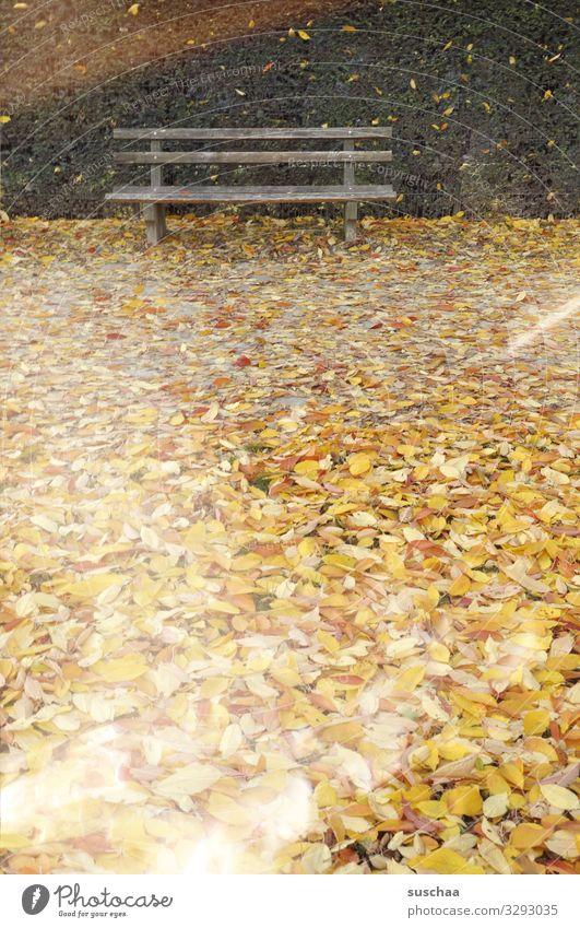 parkpank im laub Park Parkbank Sitzgelegenheit Außenaufnahme Jahreszeiten Herbst Blatt kalt Holzbank gelbe Blätter Einsamkeit allein Menschenleer verlassen