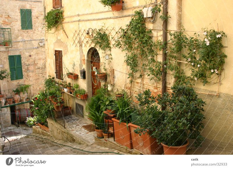 Hauseingang alt grün Pflanze Blume Haus Architektur Garten Gebäude Tür Fassade authentisch stehen Europa Sträucher Häusliches Leben