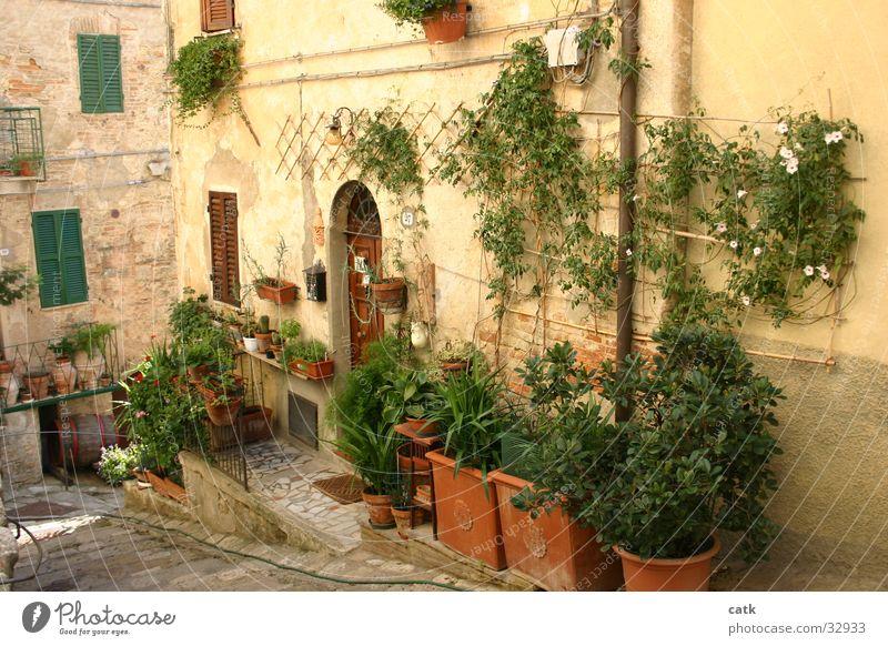 Hauseingang Häusliches Leben Garten Pflanze Blume Sträucher Kleinstadt Gebäude Tür stehen alt authentisch Klischee Italien Toskana Eingang Europa grün