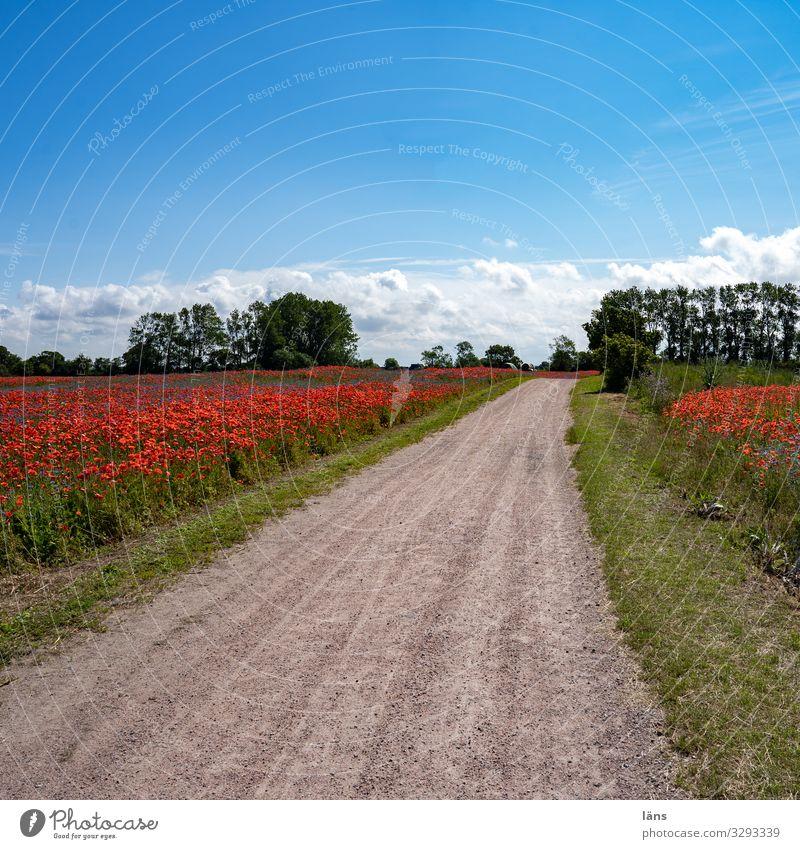 blühende Landschaft Ferien & Urlaub & Reisen Tourismus Ausflug Sommer Sommerurlaub wandern Umwelt Natur Erde Himmel Schönes Wetter Feld Verkehrswege