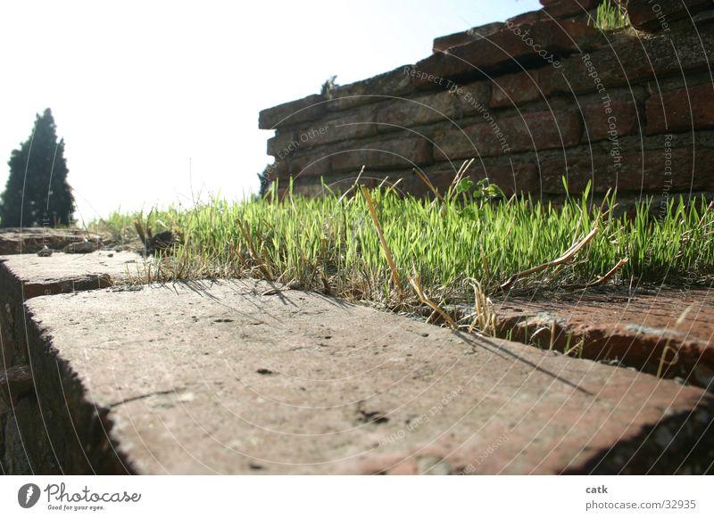 Stufe alt Baum grün Gras Garten Stein Mauer Italien historisch Toskana