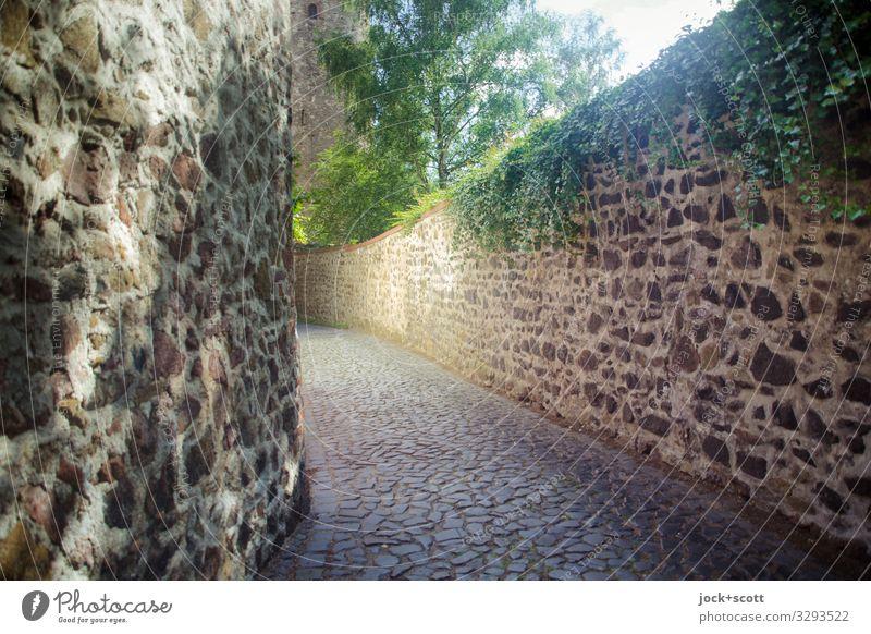 Mauer des Schweigens Sommer Stadt Baum Straße Wärme Wand Wege & Pfade authentisch historisch Städtereise Altstadt lang Weltkulturerbe Efeu