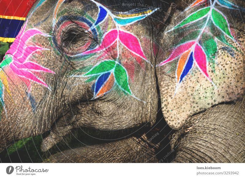 Holi elephant at Elephant Festival in Jaipur, Rajasthan, India Design Ferien & Urlaub & Reisen Veranstaltung Kultur Tier Tiergesicht 1 Feste & Feiern exotisch