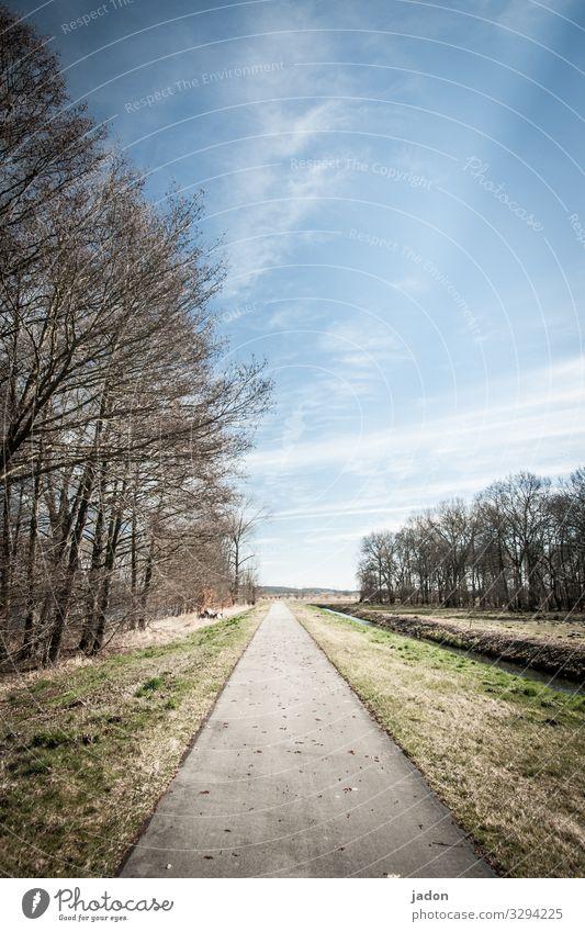 schnurgerade. Natur Landschaft Himmel Baum Feld Verkehrswege Fahrradfahren Wege & Pfade Linie friedlich ruhig Erholung Horizont Allee Baumreihe Fahrradweg