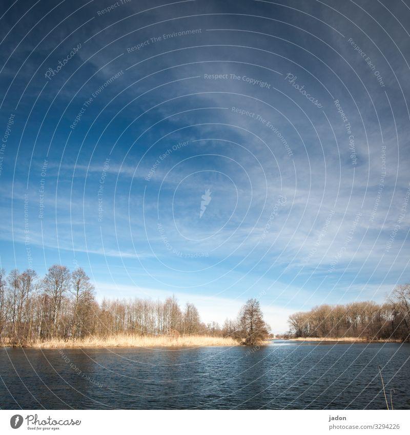 wasserwelt. bäume im fluss und blauer himmel. weisse wölkchen natürlich auch. Fluss Wasser ufer Außenaufnahme grün Landschaft Baum Wald Tag Farbfoto Umwelt