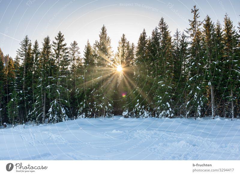 Winteridylle Leben Wohlgefühl Ferien & Urlaub & Reisen Schnee Winterurlaub wandern Wintersport Natur Landschaft Wolkenloser Himmel Schönes Wetter Eis Frost