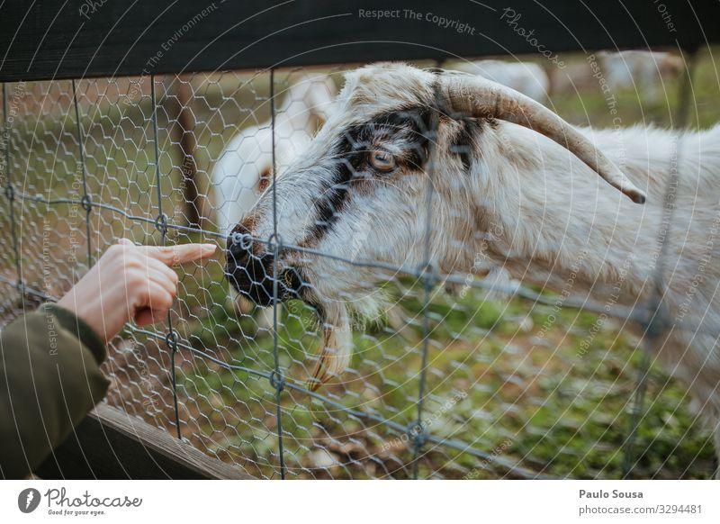 Frau Finger berührende Ziege Lifestyle Mensch Hand Umwelt Natur Tier Nutztier Ziegen beobachten Ferien & Urlaub & Reisen authentisch natürlich Neugier niedlich